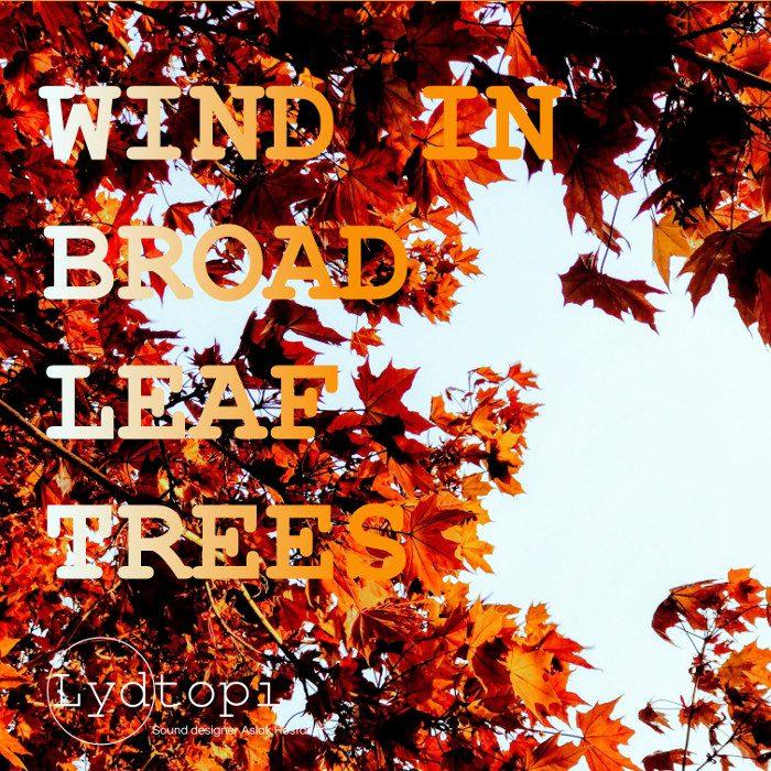 Wind In Broadleaf Trees