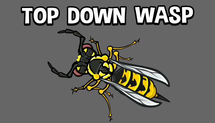 Top down wasp game asset