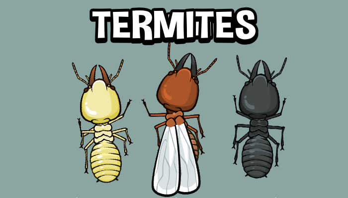 Animated termite game asset