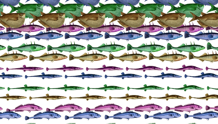 4 animated fish in 4 colors