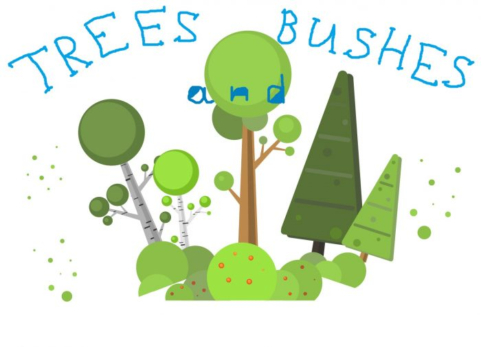 Forest and Bushes