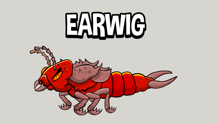 Animated earwig