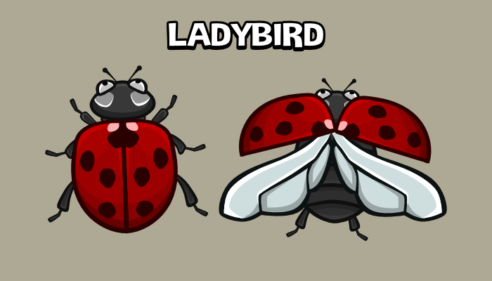 Animated ladybird 2d game sprite