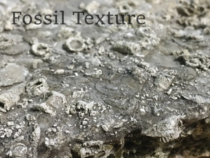 Tileable Fossil Texture