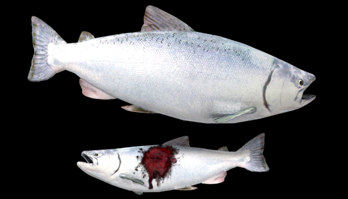 Realistic Salmon