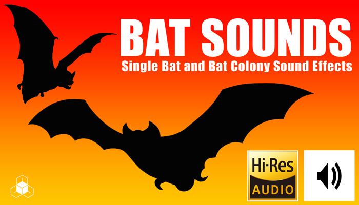 Bat Sounds – Single Bat and Bat Colony SFX