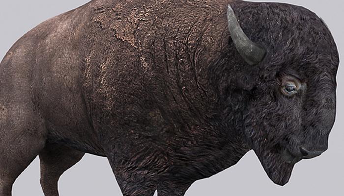 3DRT – Bison