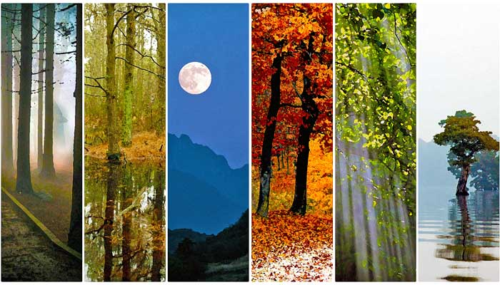 NATURE – Background Loops