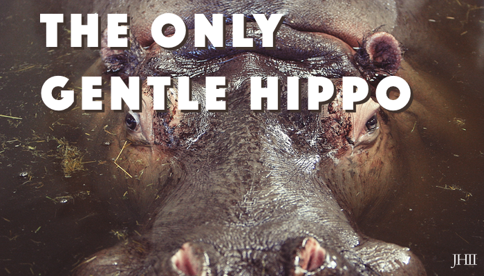 The Only Gentle Hippo