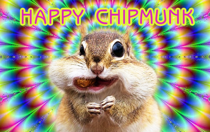Happy Chipmunk – Loop Tune 02