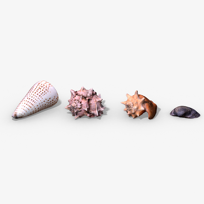Photorealistic Seashells Collection – Scanned PBR