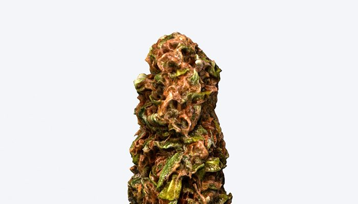 Marijuana Bud – Photoscanned PBR