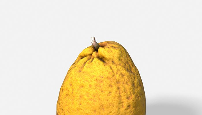 Fruit Citron – Photoscanned PBR