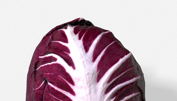 Vegetable Red Chicory – Photoscanned PBR