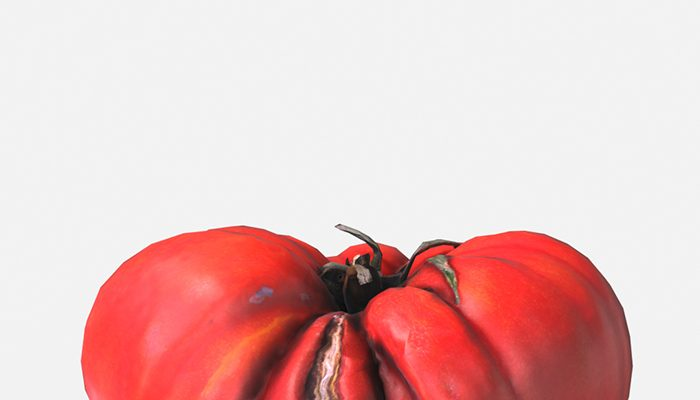 Vegetable Tomato – Photoscanned PBR