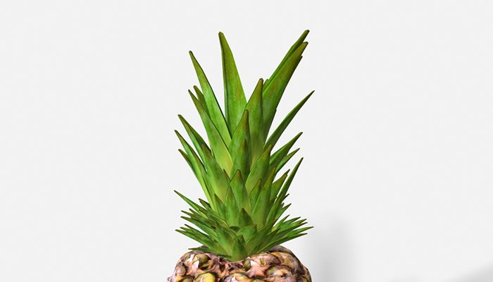 Exotic Fruit Pineapple – Photoscanned PBR
