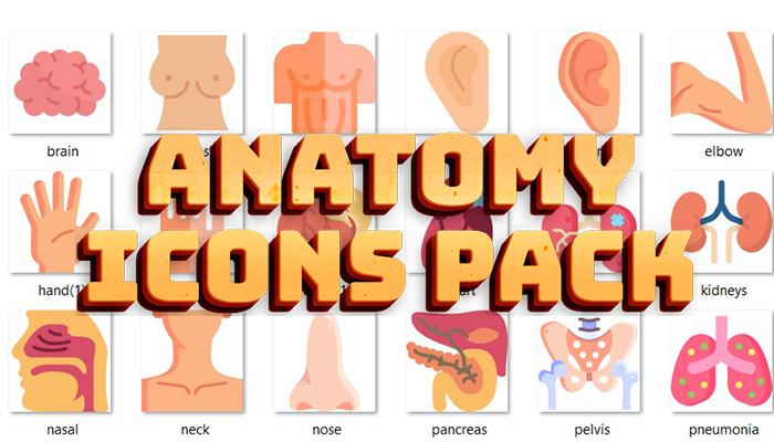 Anatomy Icons Pack