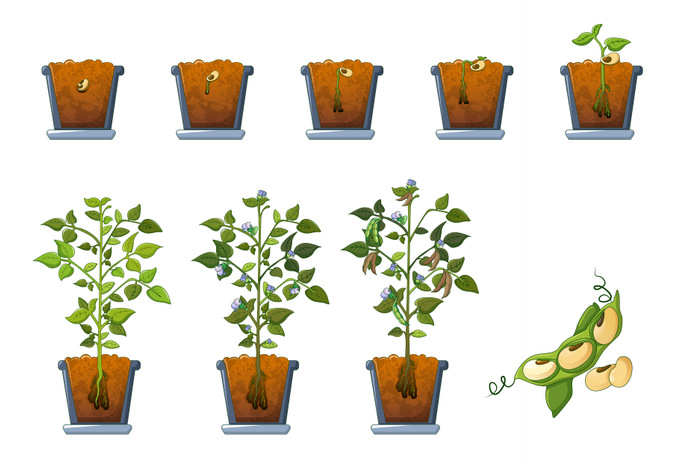 Soy beans seed sprout in pot icons set, flat style