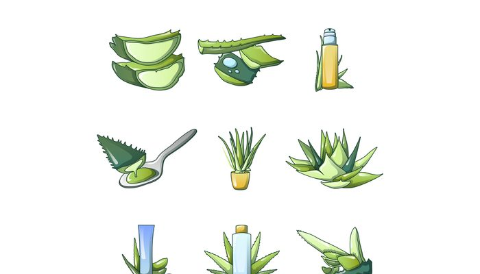 Aloe vera icon set, cartoon style