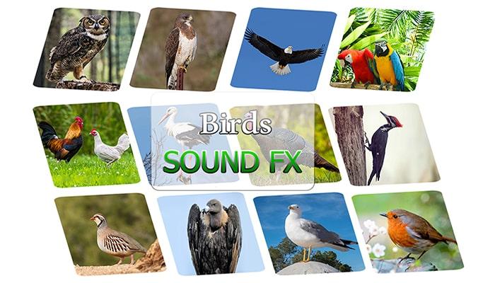 Birds SFX
