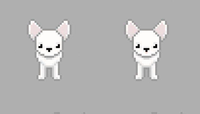 Dog – chihuahua