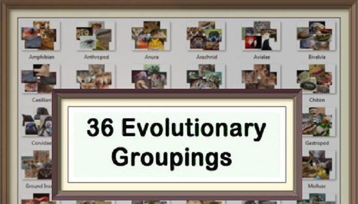 36 Evolutionary Groupings