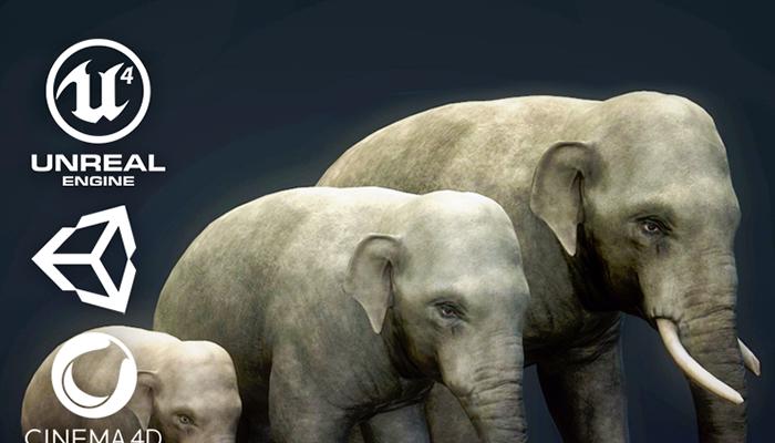 Asian Elephants – Game Ready