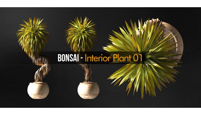 Bonsai Interior Plant 01