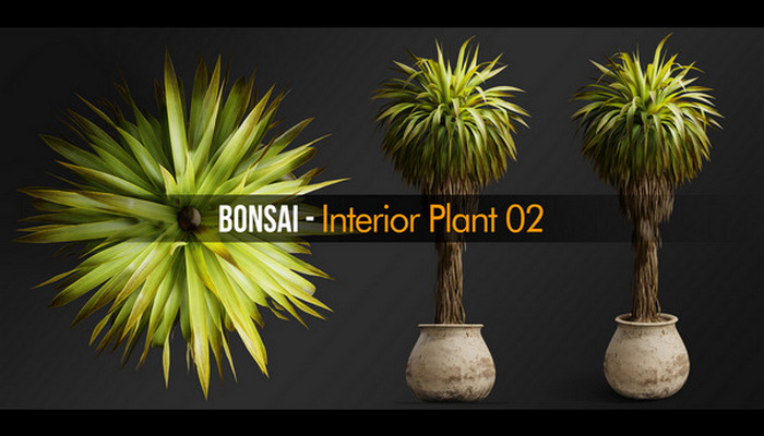 Bonsai Interior Plant 02